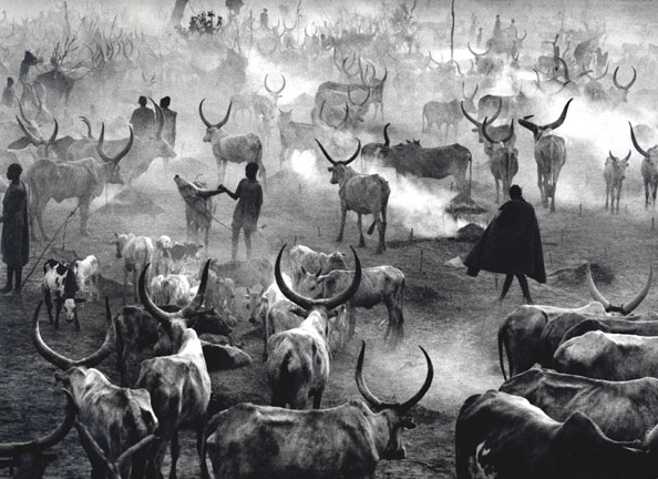 Herdsmen driving their cattle into a camp in southern Sudan in 2006.