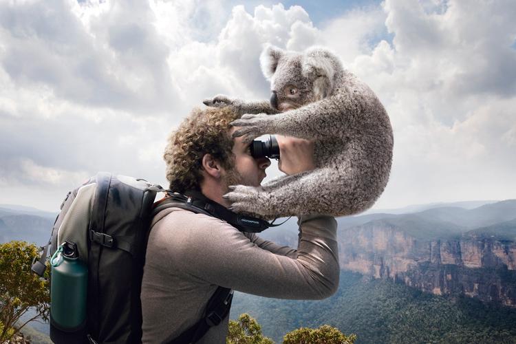 Adam Taylor's Olympus Campaign - Koala