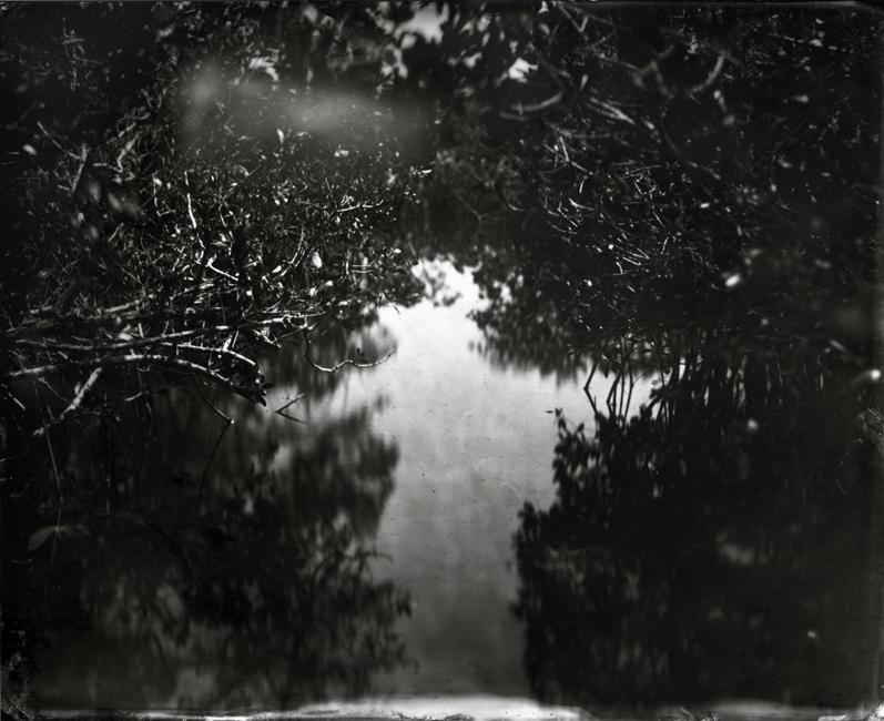 Lisa Elmaleh - Everglades