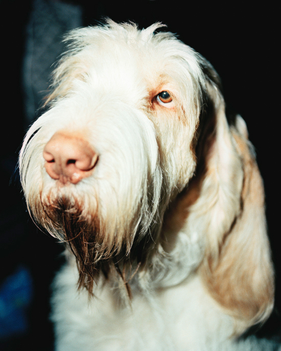 Ryan Pfluger - Nowness - Westminster Dog Show
