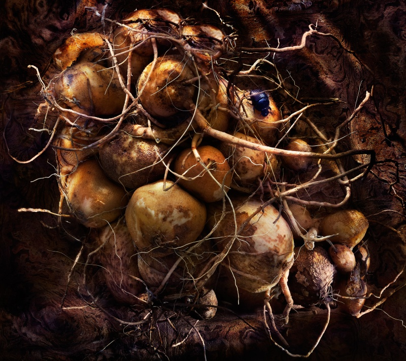 root vegetables, beatle, dark, underground, food photography, photography, david bishop, still life photography, dramatic lighting david bishop photography