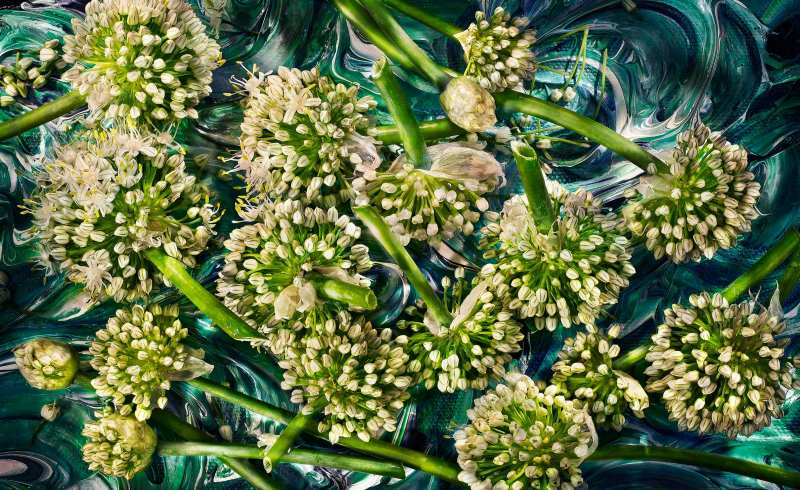 Edible-Flowers--Garlic-Flowers-Web