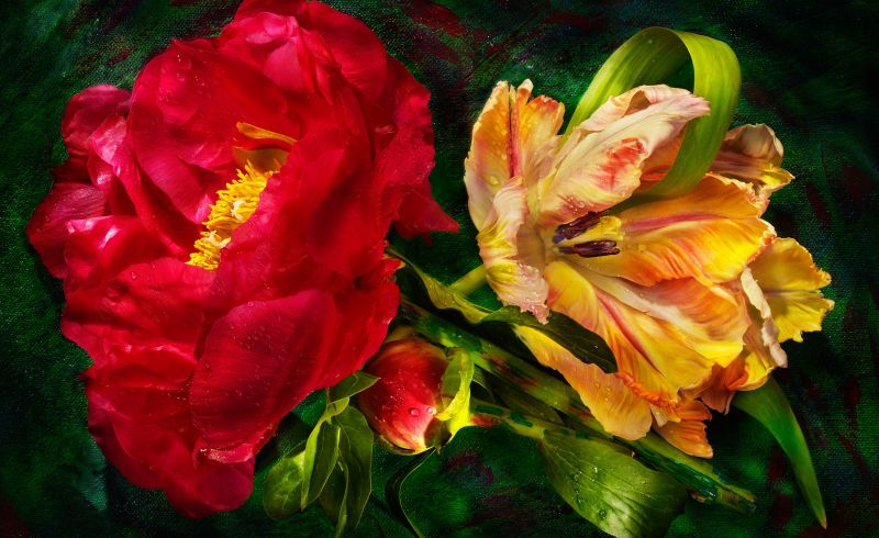 Parrot-and-Peony-3